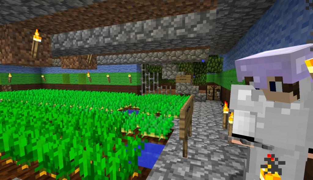 Kasveja kasvaa talon sisällä.